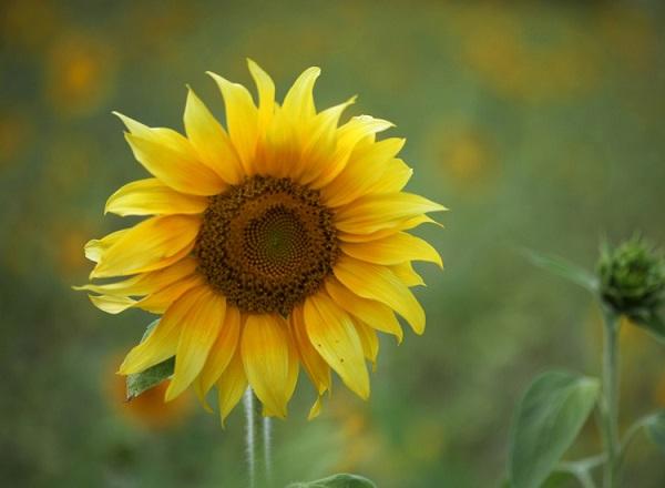 Cómo potenciar el pensamiento positivo en verano