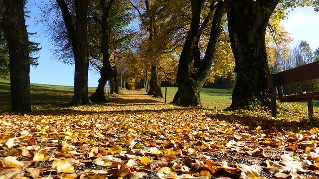 Cómo tener una actitud vital en otoño